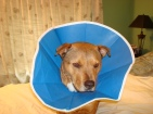 cone of shame 005