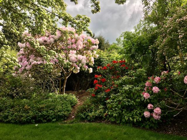Mikos Garden1aIMG_1530
