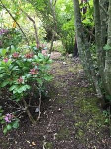 Mikos Garden2